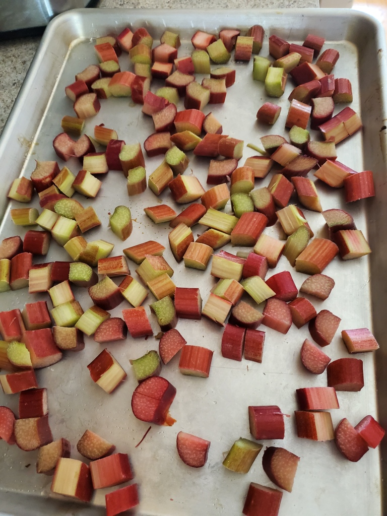 Baking sheet with pieces of rhubarb in single layer for freezing